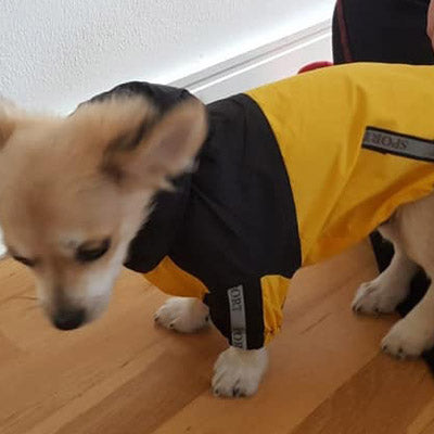 Urban Pup Chihuahua Puppy Chihuahua or Small Dog Black & Yellow Trailfinder Windbreaker Jacket
