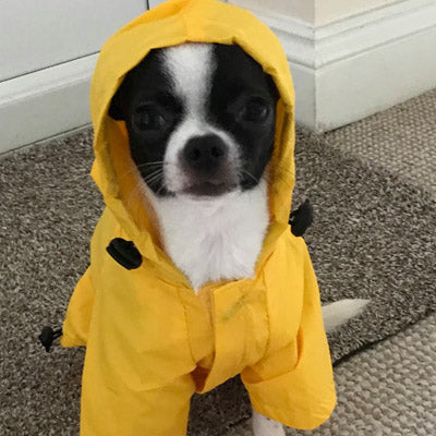 Urban Pup Chihuahua Puppy Chihuahua or Small Dog Yellow Explorer Raincoat Chihuahua Clothes and Accessories at My Chi and Me