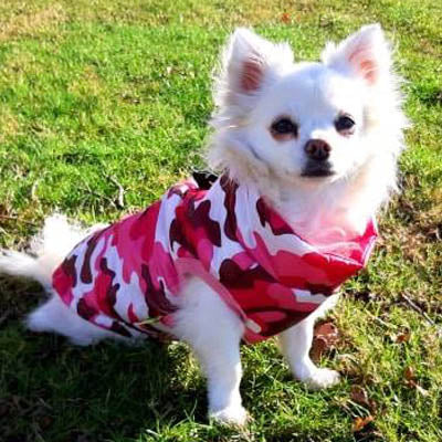 Premium Pink Camouflage Water Resistant Padded Gilet Style Dog Coat - My Chi and Me