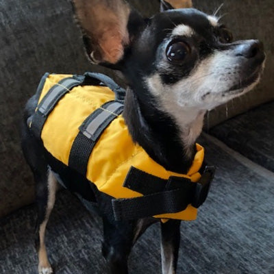 Pet Life Jacket Buoyancy Aid for Chihuahuas or Small Dogs Yellow Chihuahua Clothes and Accessories at My Chi and Me