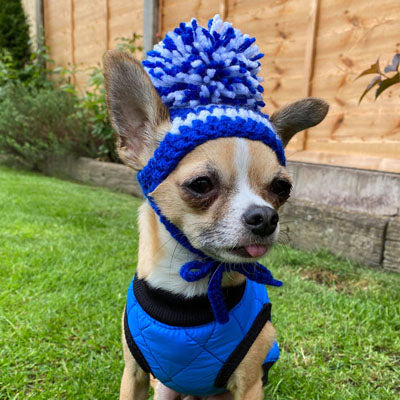 Small Dog Hand Knitted Chihuahua Hat with Pom Pom Boys 20 COLOURS Chihuahua Clothes and Accessories at My Chi and Me