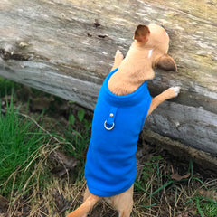 Chihuahua or Small Dog Fleece Jumper with D Rings For Leash Blue Chihuahua Clothes and Accessories at My Chi and Me
