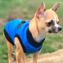 Water Resistant Padded Quilted Blue Dog Gilet