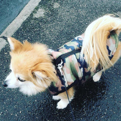Gilet Style Dog Coat Water Resistant Padded Green Camouflage Jacket Chihuahua Clothes and Accessories at My Chi and Me