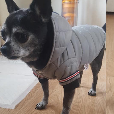 Lightweight Sporty Padded Unisex Chihuahua Puppy or Small Dog Hooded Coat Silver Grey - My Chi and Me