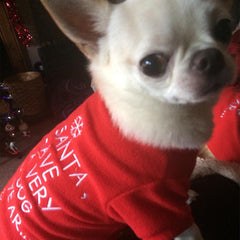 Christmas Fleece Chihuahua and Small Dog Jumper Dear Santa I Have Been A Very Good Dog This Year Chihuahua Clothes and Accessories at My Chi and Me