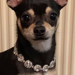Chihuahua Bling Necklace Small Dog Swarovski Crystal Collar 2 SIZES Chihuahua Clothes and Accessories at My Chi and Me