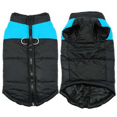 Chihuahua or small breed dog coat black and blue water resistant gilet style