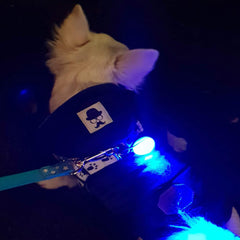 LED Flashing Small Dog Collar or Chihuahua Harness Light Battery Operated 9 COLOURS Chihuahua Clothes and Accessories at My Chi and Me