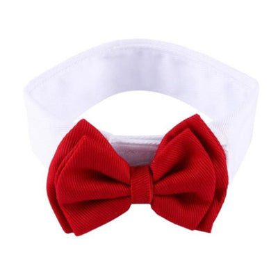 Bow Tie and Dress Shirt Collar for Chihuahuas and Small Dogs Red Chihuahua Clothes and Accessories at My Chi and Me