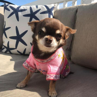 Size 5 Hand Embroidered Peruvian Dog Jumper Candy Pink 32cm Chihuahua Clothes and Accessories at My Chi and Me