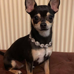 Chihuahua Bling Necklace Small Dog Swarovski Crystal Collar