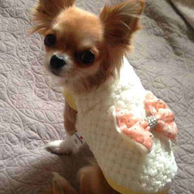 Chihuahua Puppy Fluffy Jumper with White Daisy Chain and Diamante Cherry Print Bow Lemon Chihuahua Clothes and Accessories at My Chi and Me