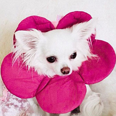 Post Surgery Soft Protective Flower Collar Dark Pink - My Chi and Me