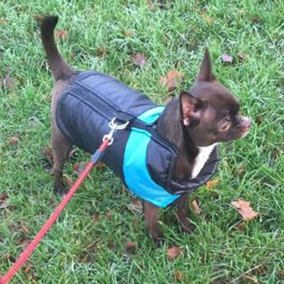 Gilet style chihuahua dog coat black and blue water resistant