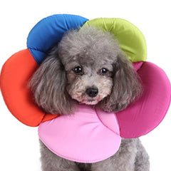 Dog wearing post surgery soft flower collar in multicoloured fabric