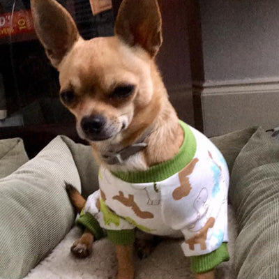 Chihuahua Small Dog Pyjamas Onesie Style Dinosaurs Print Cotton Chihuahua Clothes and Accessories at My Chi and Me