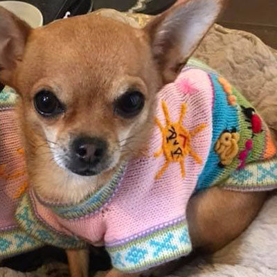 Size 2 Hand Embroidered Peruvian Dog Jumper Baby Pink 25cm - My Chi and Me