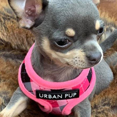 Pink Argyle Harness by Urban Pup - My Chi and Me