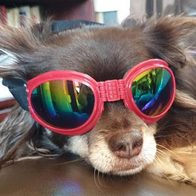 Doggles Dog Goggles for Larger Chihuahuas and Small Dogs SALE Chihuahua Clothes and Accessories at My Chi and Me