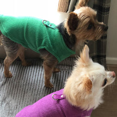 Chihuahua or Small Dog Fleece Jumper with D Rings For Leash Green - My Chi and Me