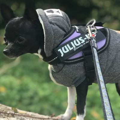 Super Soft Padded Chihuahua or Small Dog Coat Small Chihuahua Clothes and Accessories at My Chi and Me
