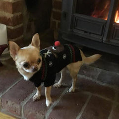 Rudolf The Red Nosed Reindeer Dog Jumper Chihuahua Clothes and Accessories at My Chi and Me