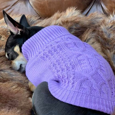 Chihuahua Puppy Chihuahua or Small Dog Cable Knit Jumper Lilac Chihuahua Clothes and Accessories at My Chi and Me