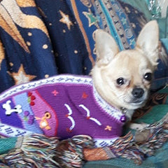 Size 4 Hand Embroidered Peruvian Dog Jumper Purple 27cm Chihuahua Clothes and Accessories at My Chi and Me