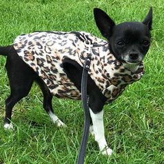 Leopard Print Water Resistant Padded Gilet Style Coat Chihuahua or Small Dog and flat black lead