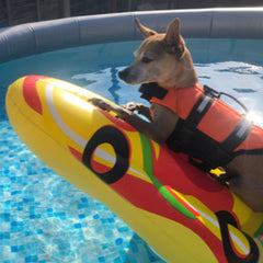 Pet Life Jacket Buoyancy Aid Vest for Chihuahuas or Small Dogs XS Chihuahua Clothes and Accessories at My Chi and Me