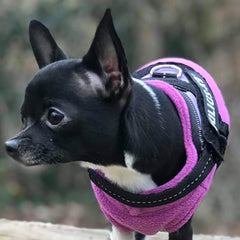 Julius K9 IDC Powerharness for Puppies and Chihuahuas Purple Chihuahua Clothes and Accessories at My Chi and Me