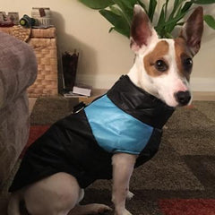 Chihuahua or small breed dog coat gilet style black and blue