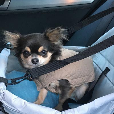 Premium Portable Folding Travel Car Seat Strong Grey Nylon PVC Coated Cloth Chihuahua Clothes and Accessories at My Chi and Me