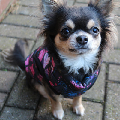 Water Resistant Padded Stars & Hearts Chihuahua Gilet Style Dog Coat