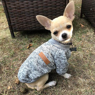 Chihuahua Puppy and Small Chihuahua Knitted Cosy Fleece Lined Jumper 13 Colours Extra Small - My Chi and Me