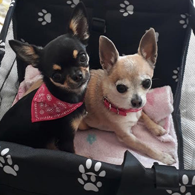 Black Folding Car Seat With White Paw Print For Puppies Chihuahuas And Small Dogs