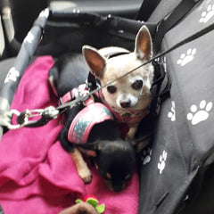 black folding car seat with white paw print for puppies, chihuahuas and small dogs