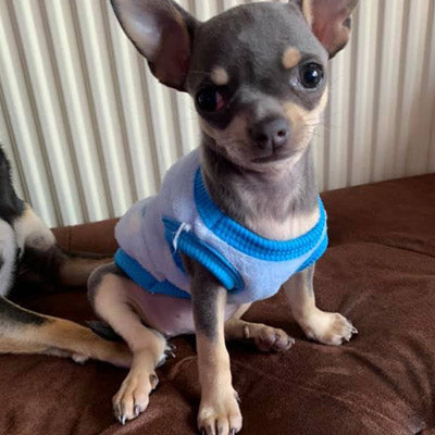 Chihuahua Puppy Fluffy Blue and White Spot Vest with Penguin Motif 5 SIZES Chihuahua Clothes and Accessories at My Chi and Me