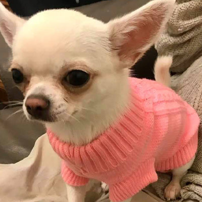 Soft Pink Cable Knit Chihuahua Puppy or Small Dog Jumper Chihuahua Clothes and Accessories at My Chi and Me
