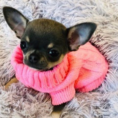 Small Dog Soft Pink Cable Knit Chihuahua Puppy Jumper 5 SIZES Chihuahua Clothes and Accessories at My Chi and Me