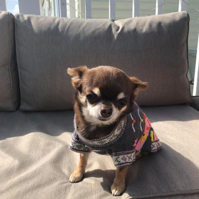 Size 3 Hand Embroidered Peruvian Dog Jumper Grey and Pink 25cm Chihuahua Clothes and Accessories at My Chi and Me
