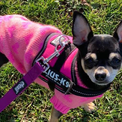 Chihuahua Puppy Chihuahua or Small Dog Orange and Pink Hearts Jumper SPECIAL OFFER Chihuahua Clothes and Accessories at My Chi and Me