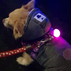 LED Flashing Small Dog Collar or Chihuahua Harness Light Battery Operated