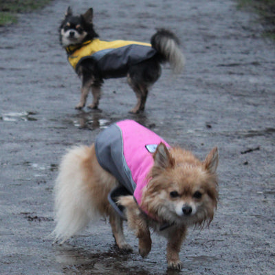 chihuahua or small dog waterproof fleece lined yellow and grey or pink and grey dog coat with reflective panels