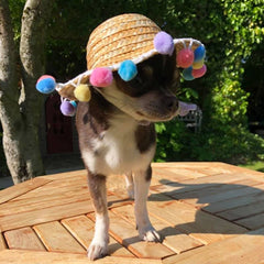 Pom Pom Sun Hat for Chihuahua Small Dog or Puppy