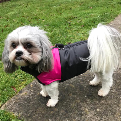 Gilet Style Water Resistant Padded Dog Coat Black And Hot Pink Jacket Chihuahua Clothes and Accessories at My Chi and Me