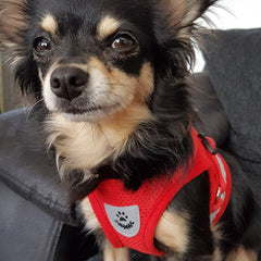 Chihuahua Mesh Reflective Vest Harness and Lead Set Bright Red Chihuahua Clothes and Accessories at My Chi and Me