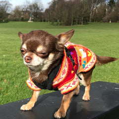 Size 3 Hand Embroidered Peruvian Dog Jumper Deep Red, Peach and Burnt Orange 26cm