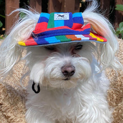 Rainbow Pride NHS Sun Hat for Chihuahua Small Dog or Puppy Chihuahua Clothes and Accessories at My Chi and Me